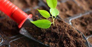 Торф почва