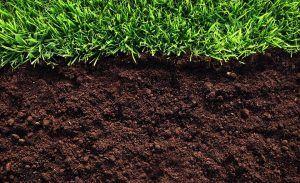 углубление в почву
